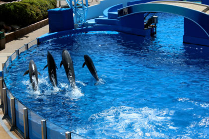 Travel Series Destination San Diego - SeaWorld