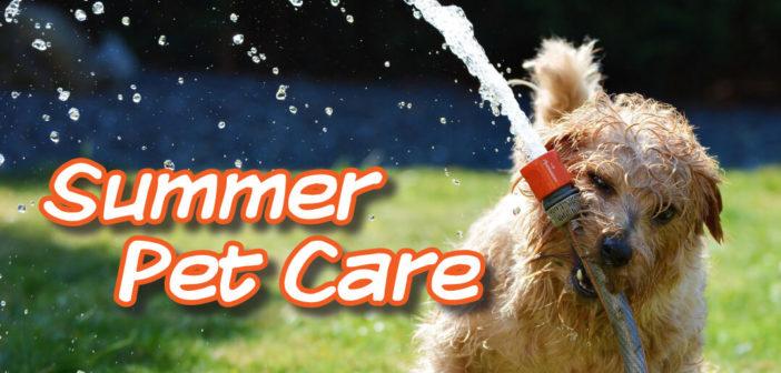 Summer Pet Care in Lincoln, NE – 2018