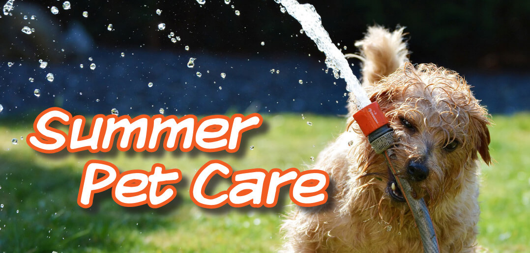 Summer pet care in lincoln ne 2018 summer pet care in lincoln ne 2018 solutioingenieria Gallery