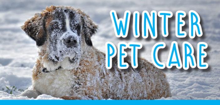 Winter Pet Care in Lincoln, NE – 2018