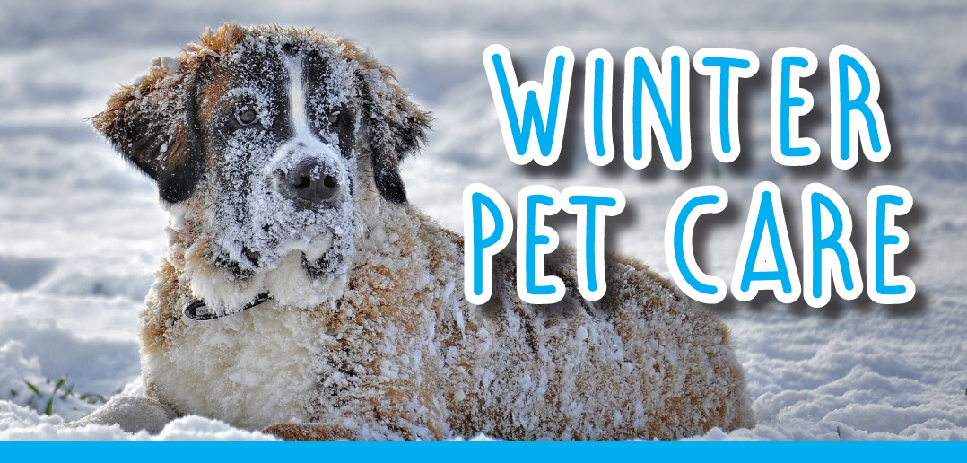Winter pet care in lincoln ne 2018 strictly business magazine winter pet care in lincoln ne 2018 solutioingenieria Image collections