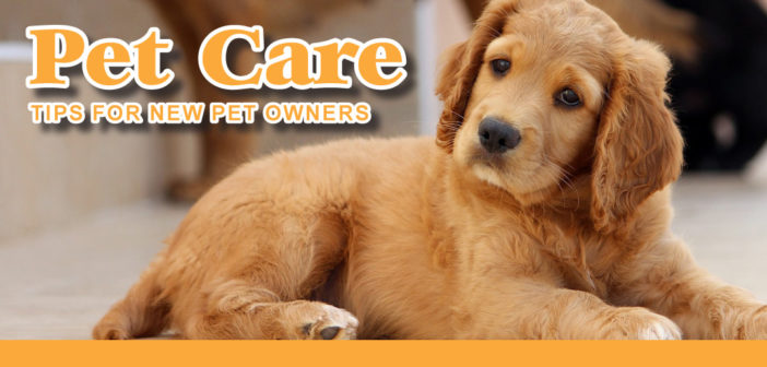 Pet Care: Tips For New Pet Owners in Lincoln, NE – 2019