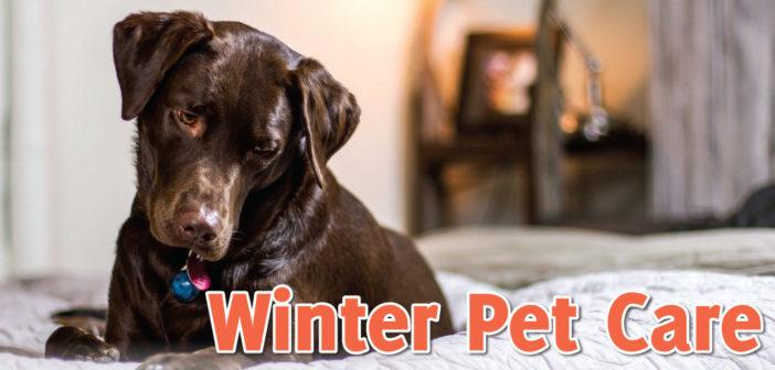 Winter Pet Care in Lincoln, NE – 2020